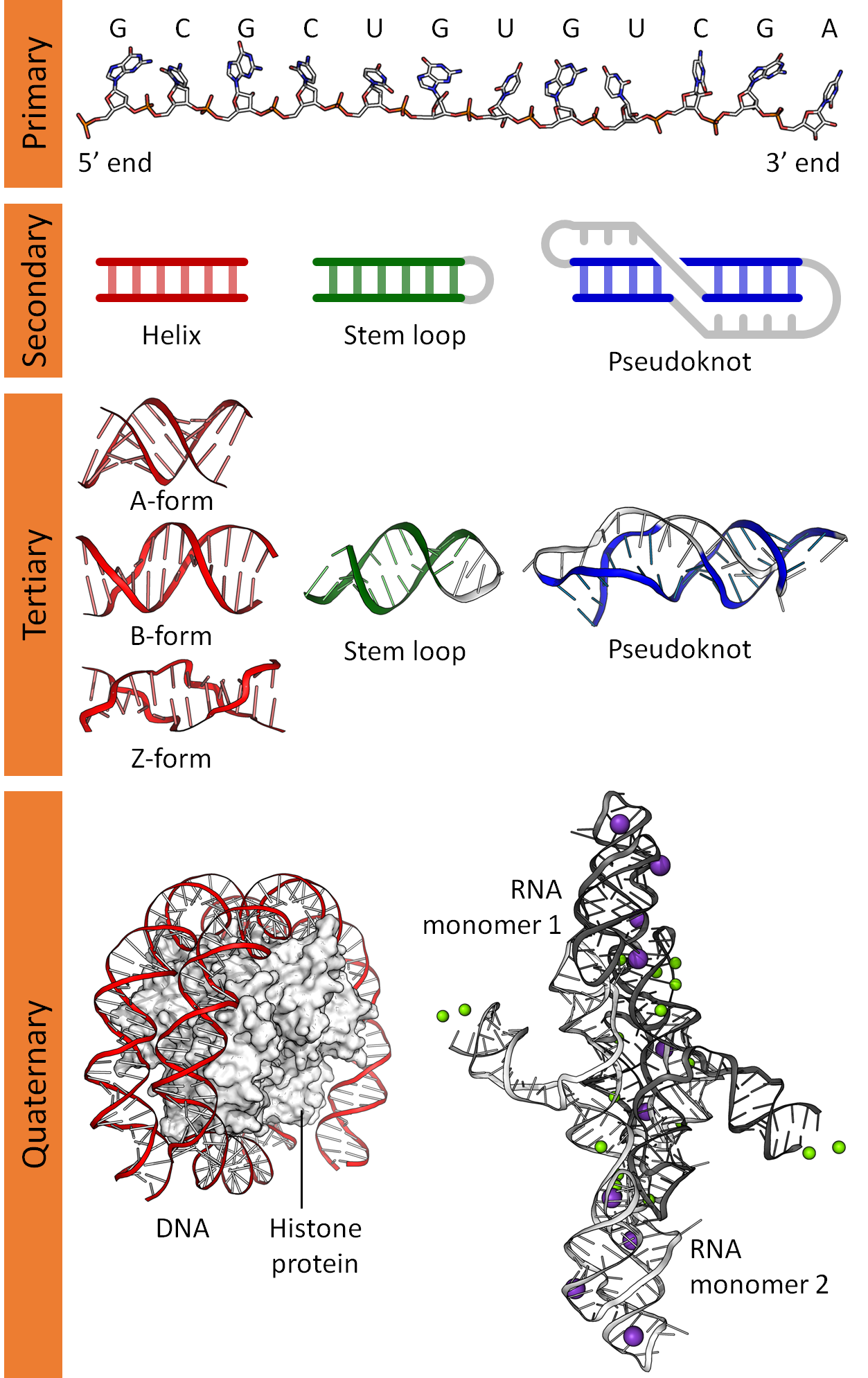 Nucleic acid structure - Wikipedia