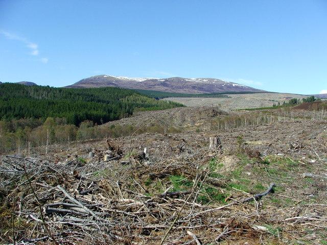 File:Deforestation - geograph.org.uk - 165560.jpg