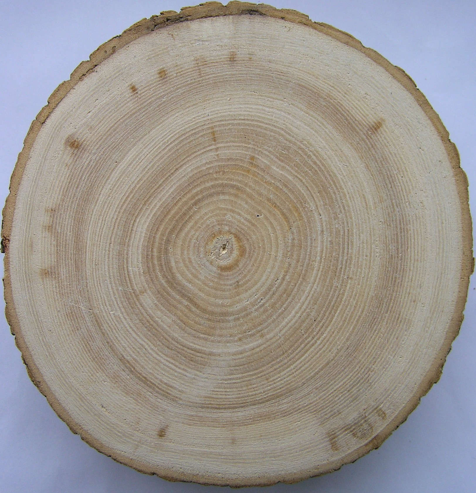 Tom clark what the wood remembers - Frene bois de chauffage ...