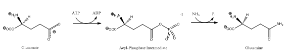 Glutamine Synthetase reaction.