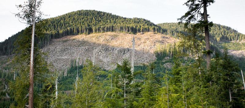 Deforestation in British Columbia - Wikipedia
