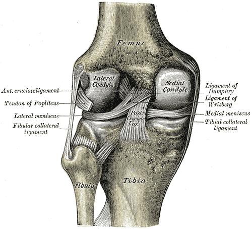 Posterior cruciate ligament injury - Wikipedia