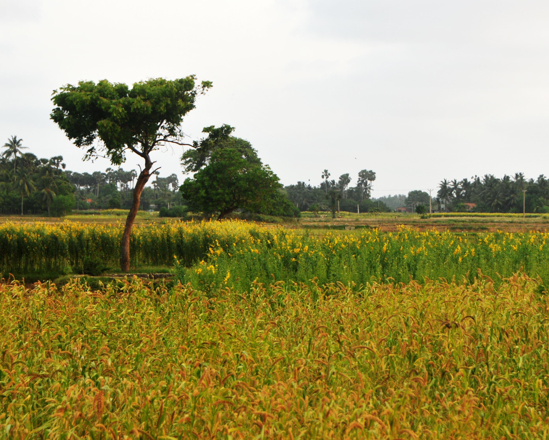 File Kandarodai Farm l...