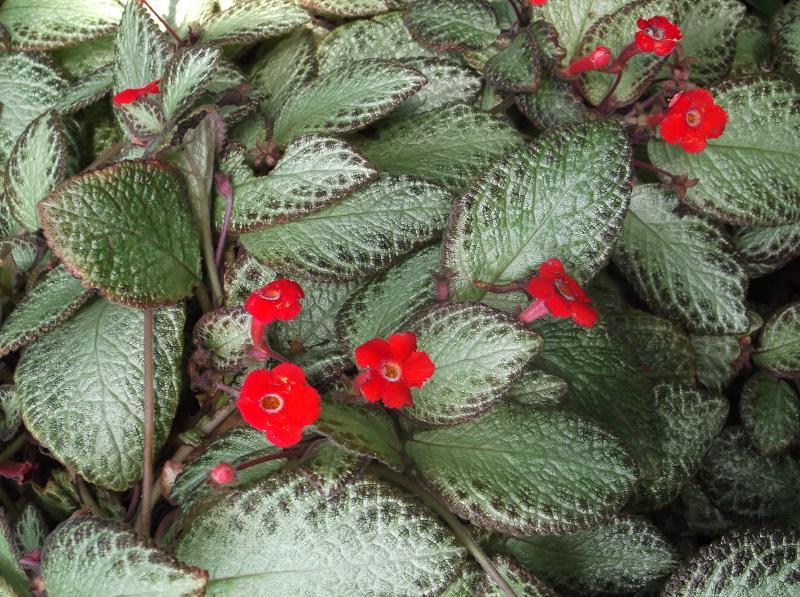 ungiftige pflanzen f r katzen eine umfangreiche sammlung. Black Bedroom Furniture Sets. Home Design Ideas