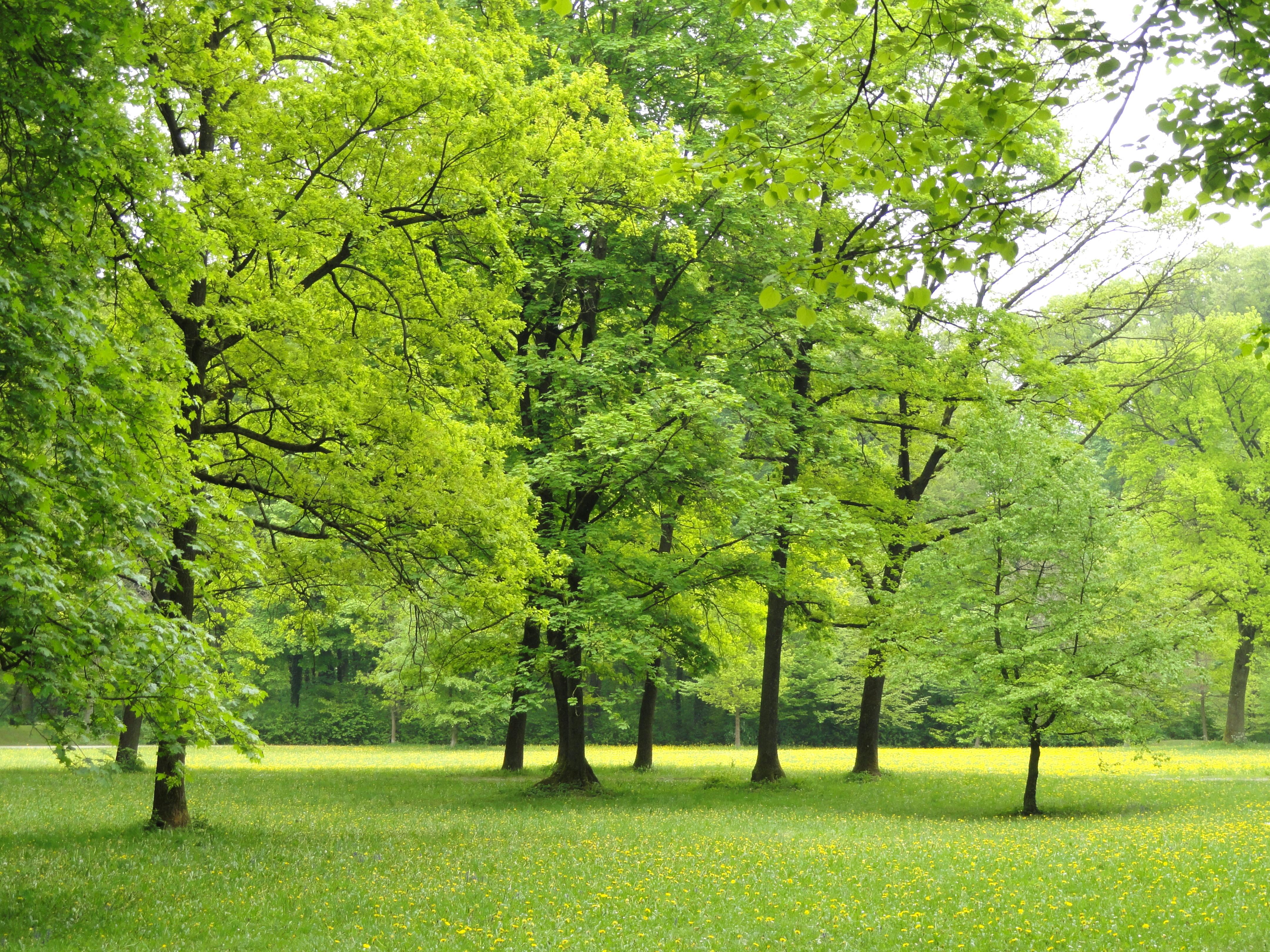 File landscape englischer garten munich dsc07139 jpg for Arboles bonitos para jardin