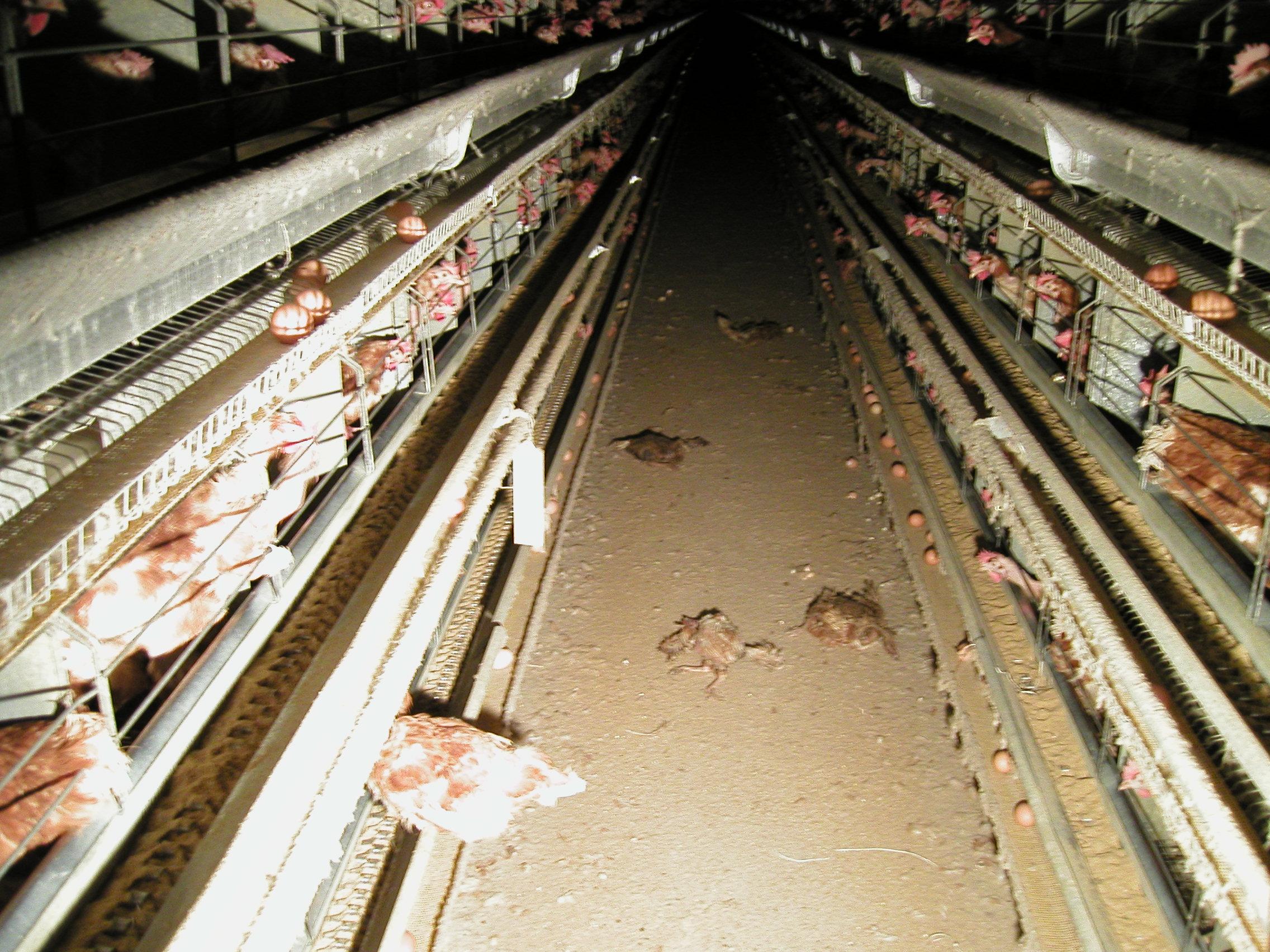 Týrání zvířat – Wikipedie c11666530a