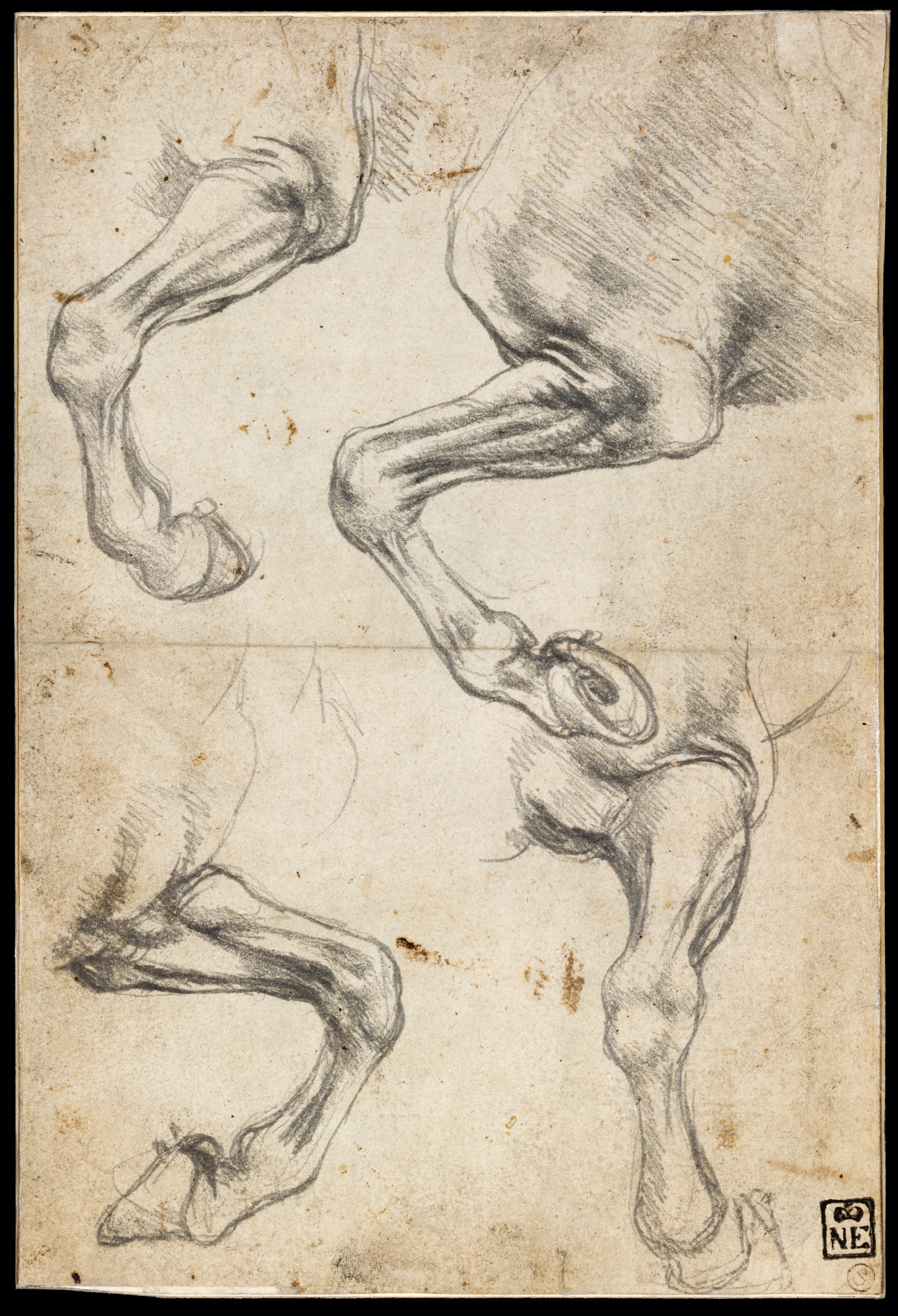 File Leonardo Da Vinci Studies Of Horse S Leg Google Art Project Jpg Wikimedia Commons