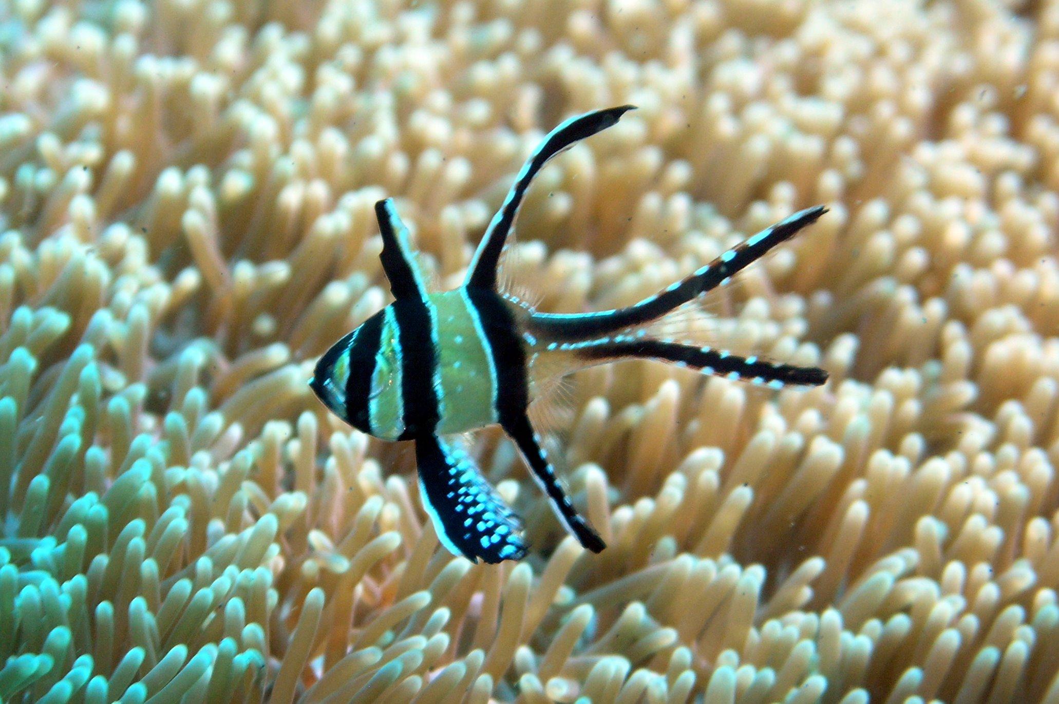 Mrramseys Saltwater Adventure 120g Build Archive Aquarium Forum Temperature Controller Stc1000 Reef Aquatics Online Store