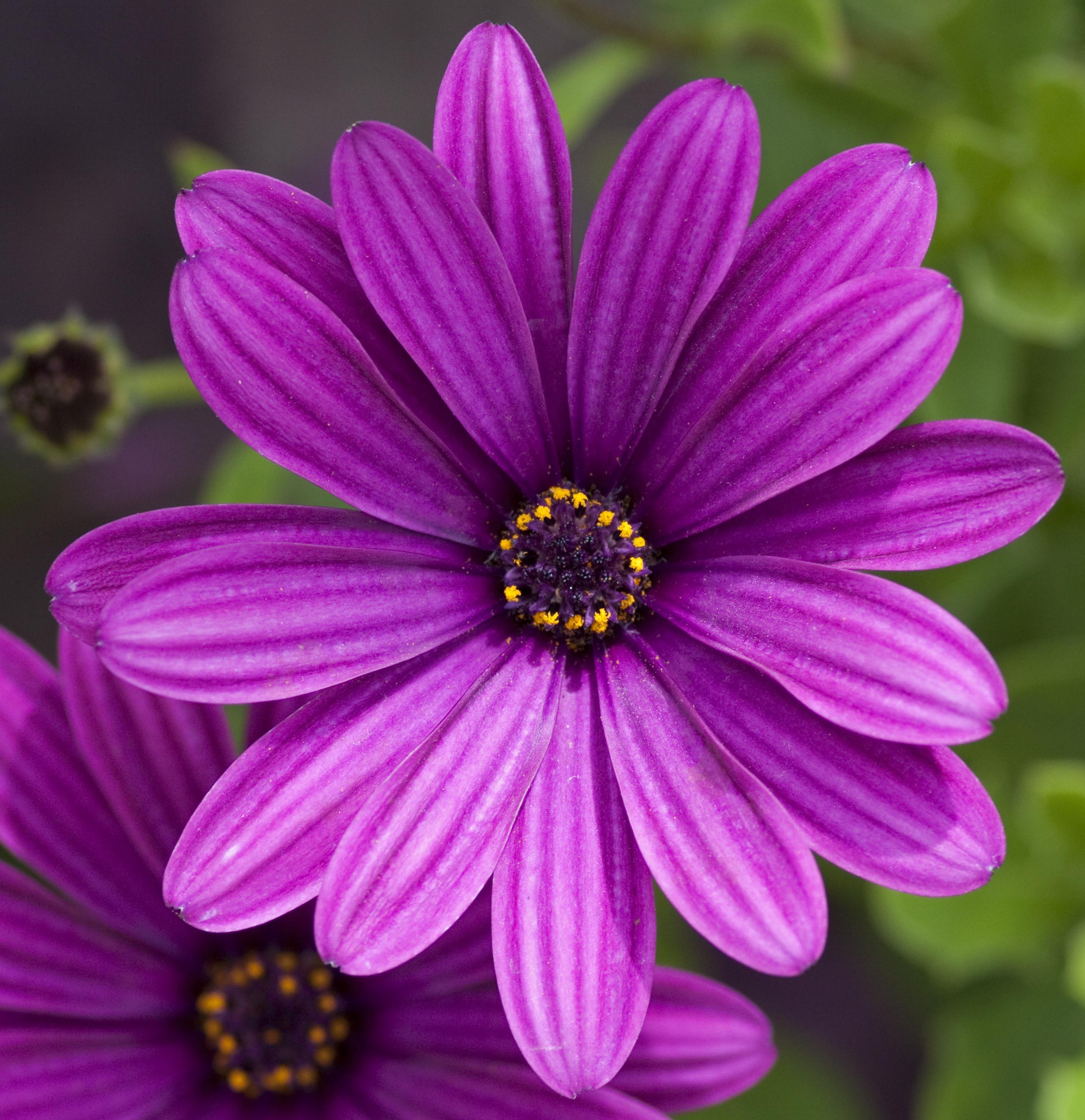 File Purple flower
