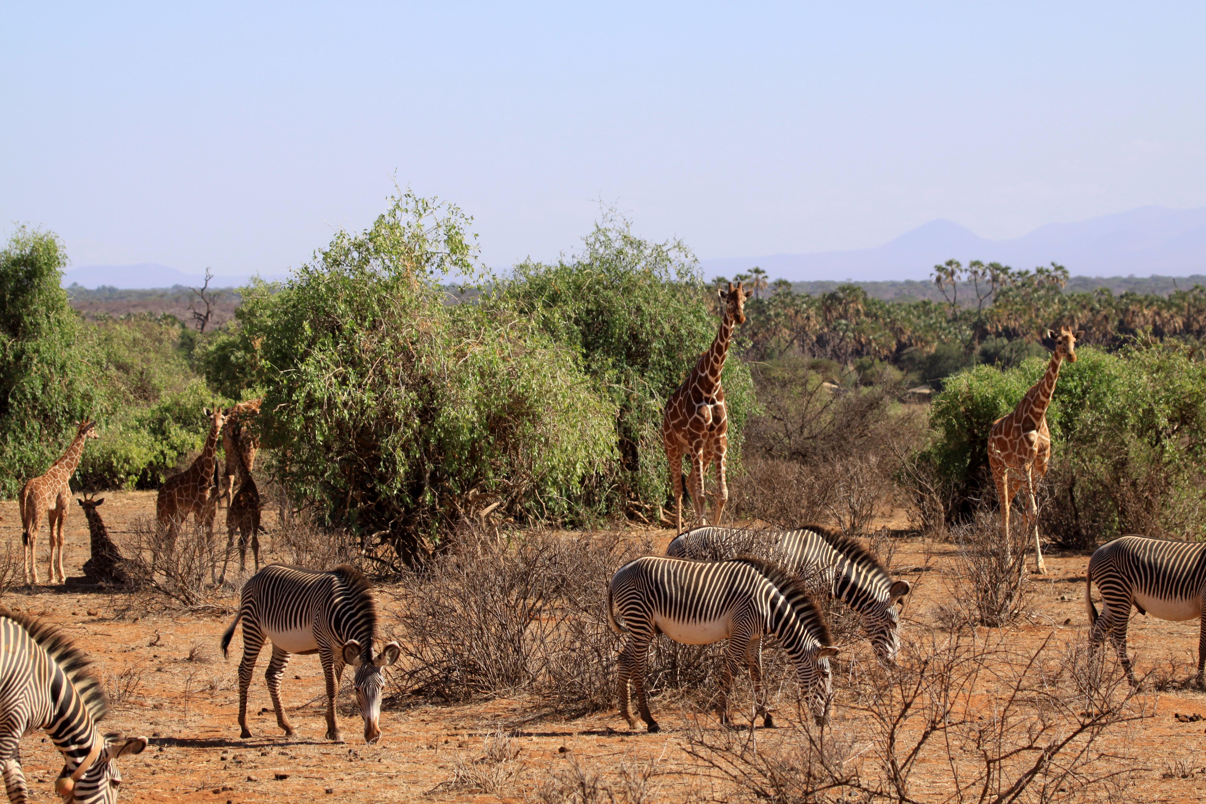 Reserve samburu faune.jpg
