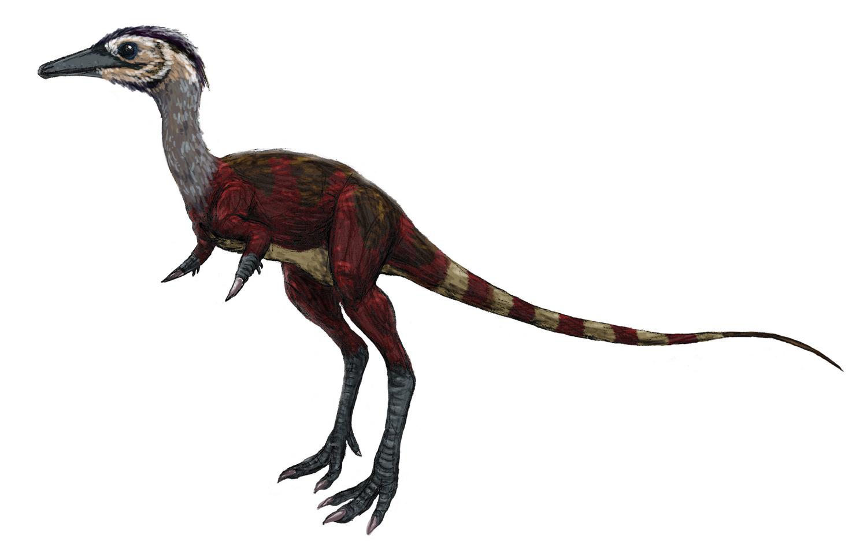 geol 104 fc theropoda ii coelurosauria tyrant kings and lesser