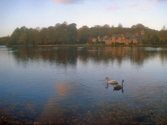 Swans on Upper Lake - geograph.org.uk - 1561150