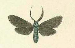 <i>Theresimima</i> Genus of moths