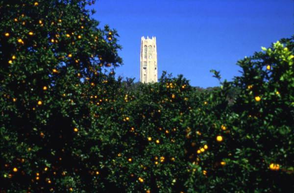 View_looking_past_orange_trees_toward_Bok_Tower-_Lake_Wales%2C_Florida_%283248152736%29.jpg