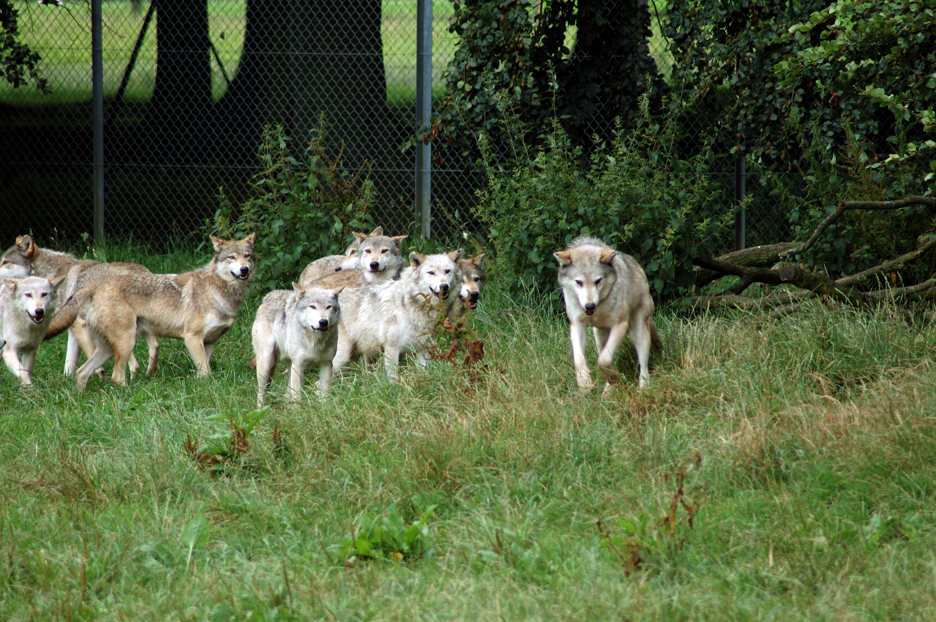 Image result for wolf pack