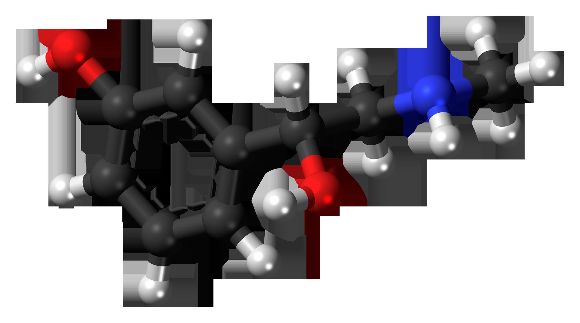 Phenylephrine   Wikipedia