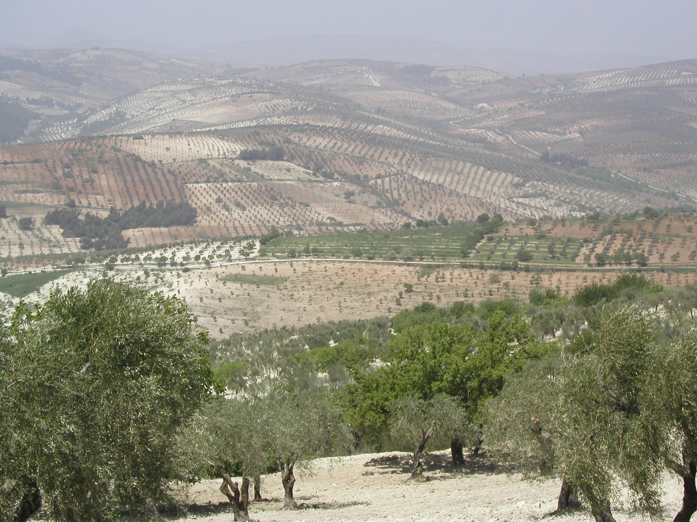 Kurd-Dagh