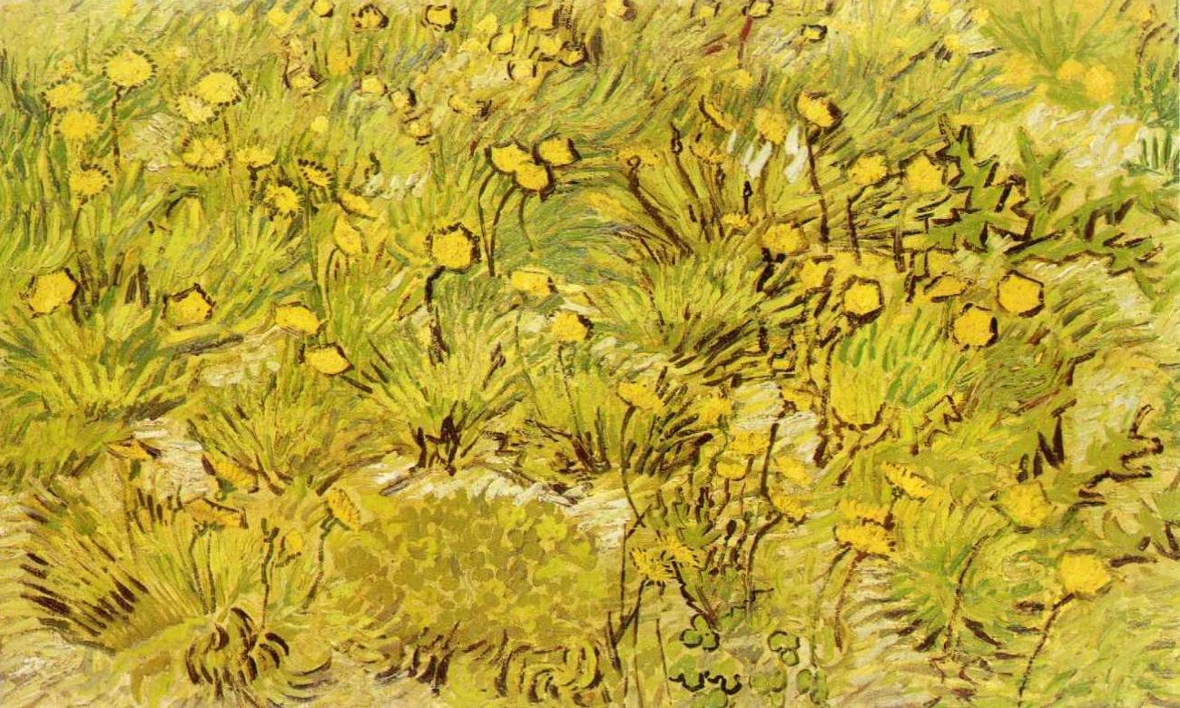 File A Field of Yellow Flowers