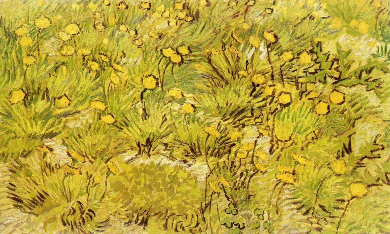 Filea Field Of Yellow Flowersg Wikimedia Commons