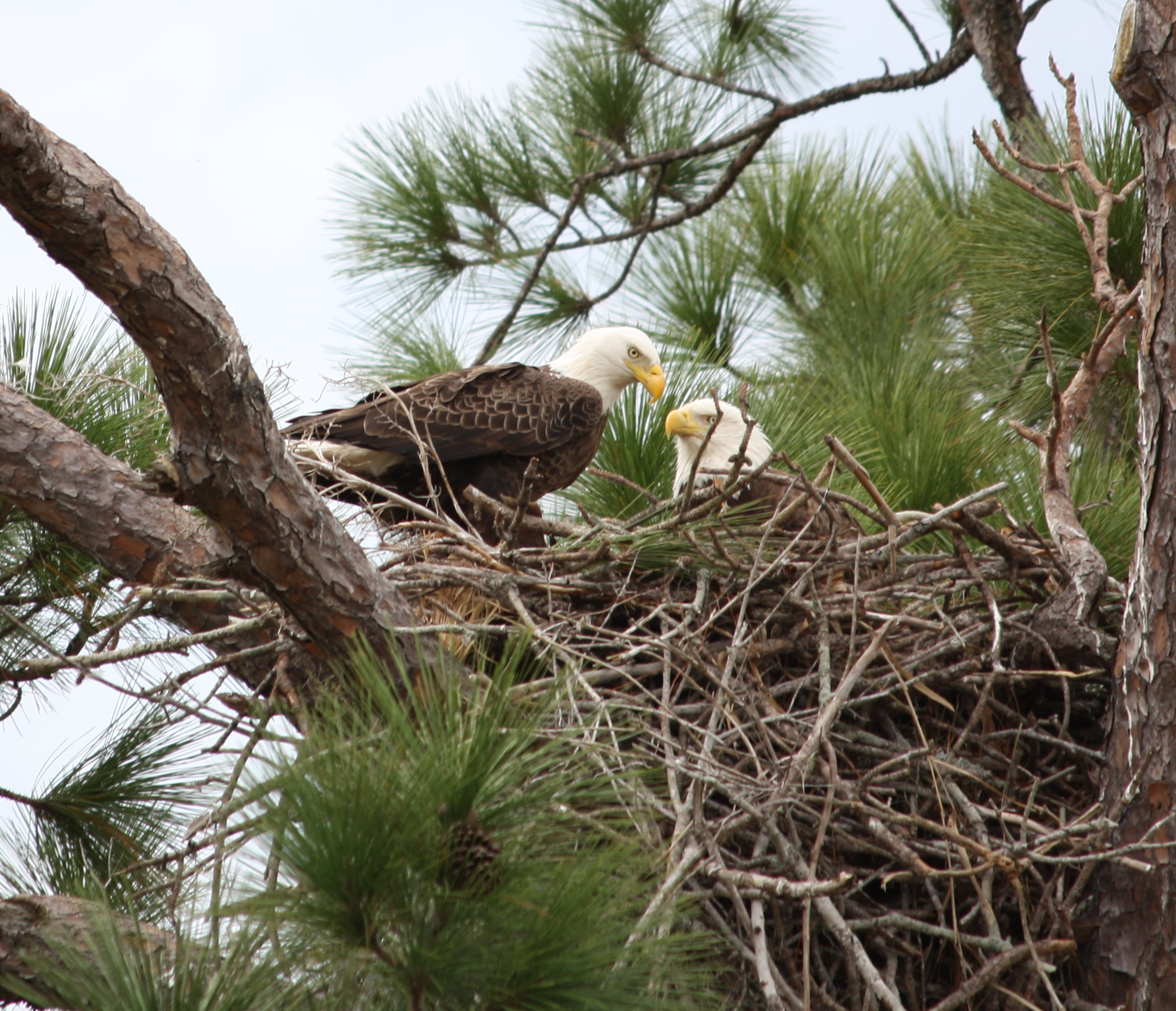 Eagle Nest On Tiger Beach Naples Fl