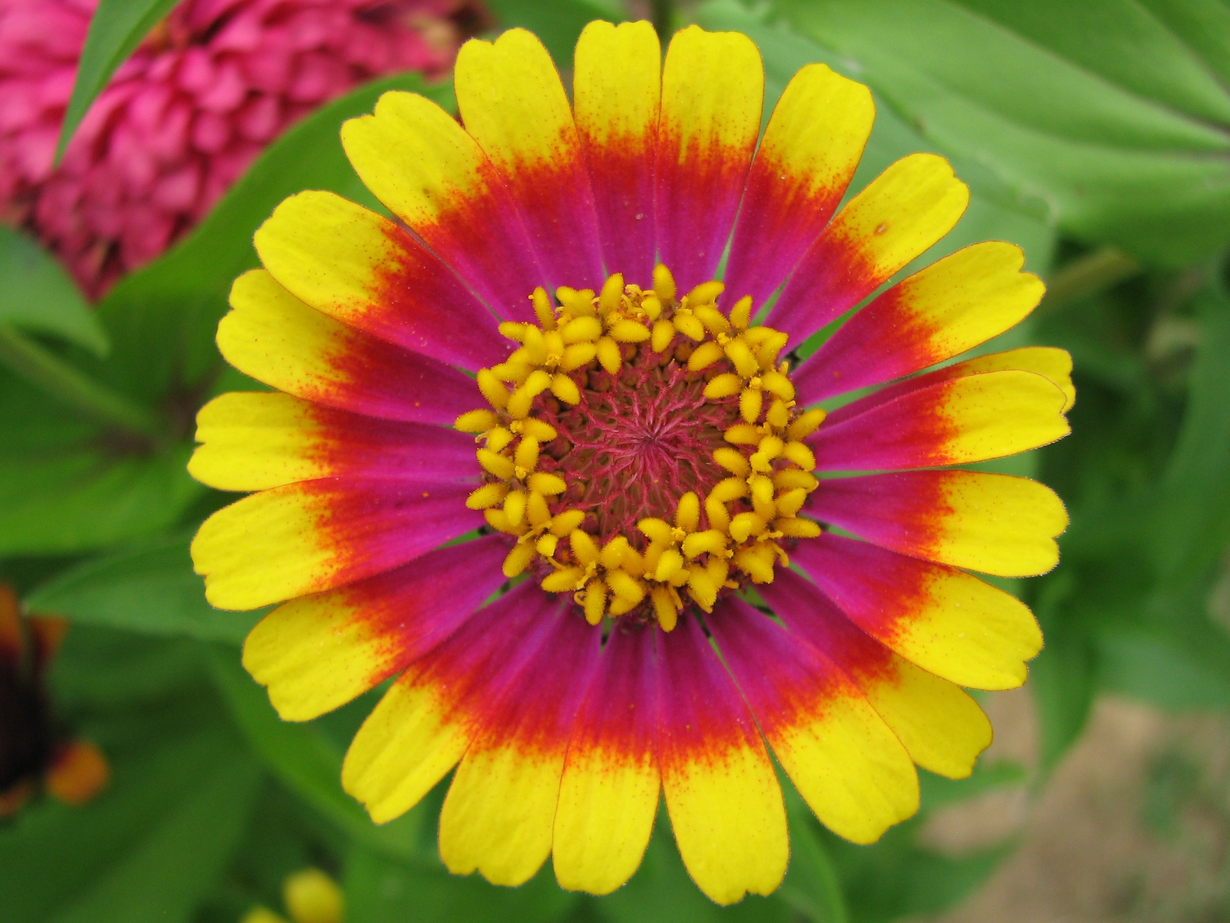 Plant and Flower Names – Girls | Dantea's Baby Names