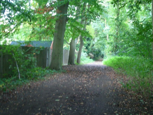 Bridleway on Esher Common - geograph.org.uk - 64323