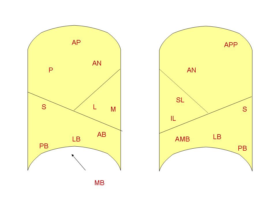 Filebronchopulmonary Segmentsg Wikimedia Commons