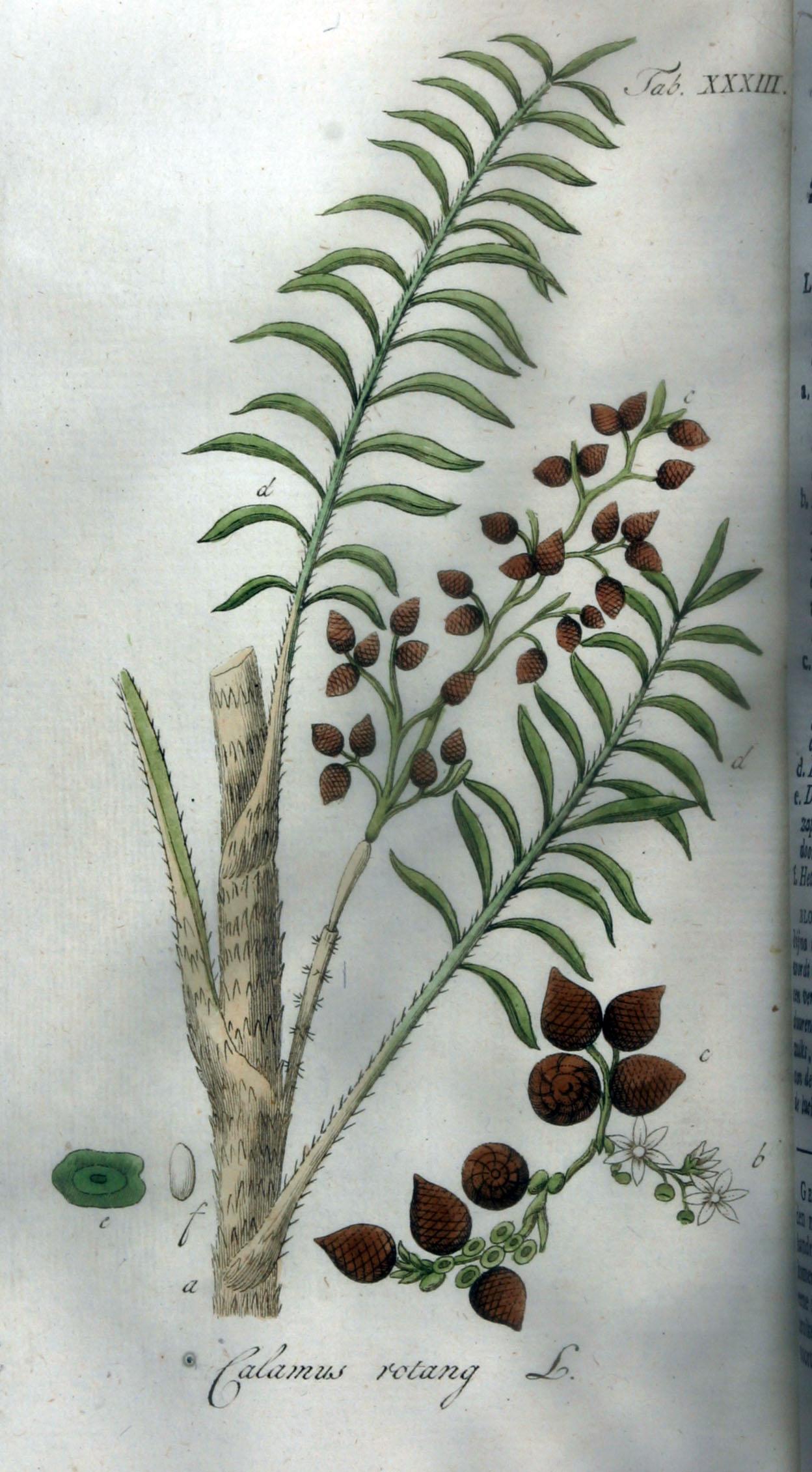 Пальма для плетения мебели 6 букв