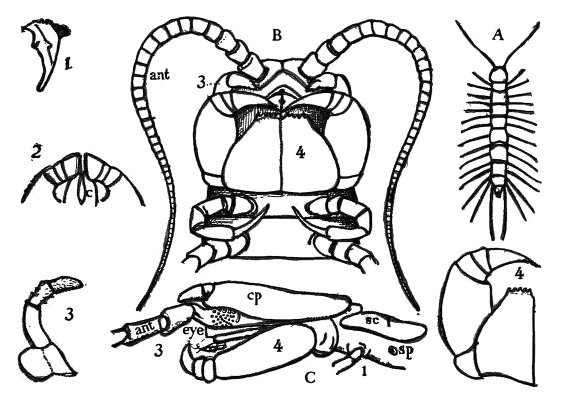 Image Result For Zoology Coloring Pages