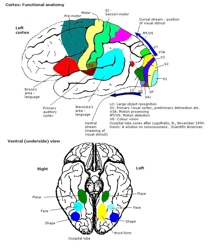Colour Centre Wikipedia