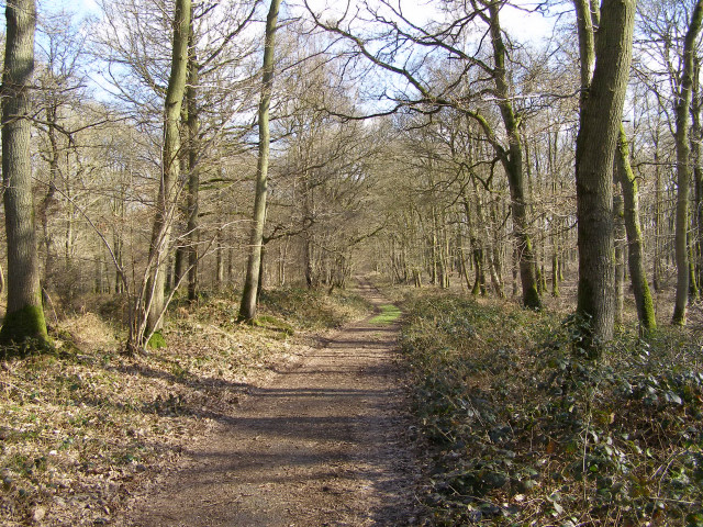 Course of the Roman road through Harewood Forest - geograph.org.uk - 147453