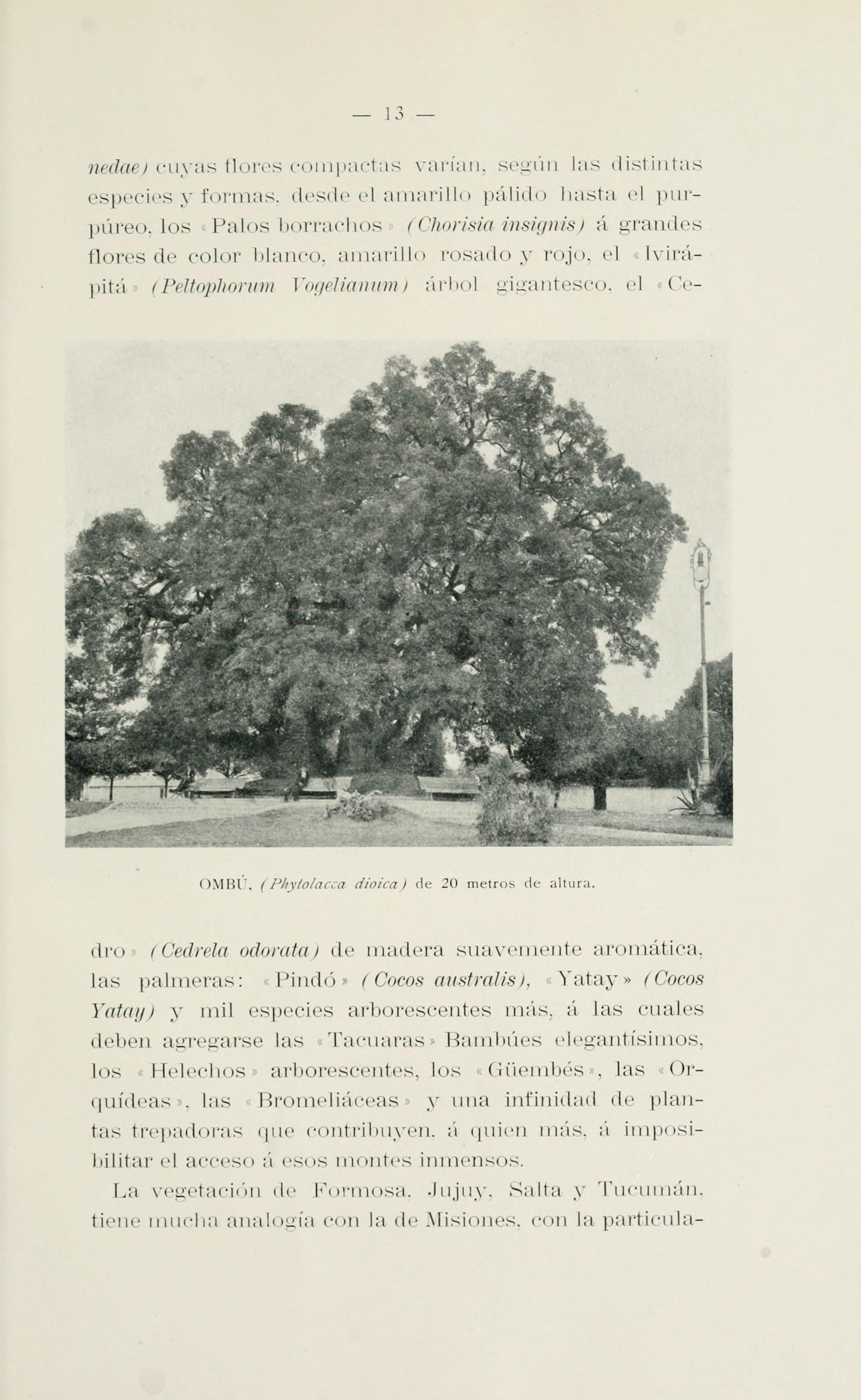 File El Jardín Botánico De Buenos Aires Page 13 Bhl16635336 Jpg Wikimedia Commons