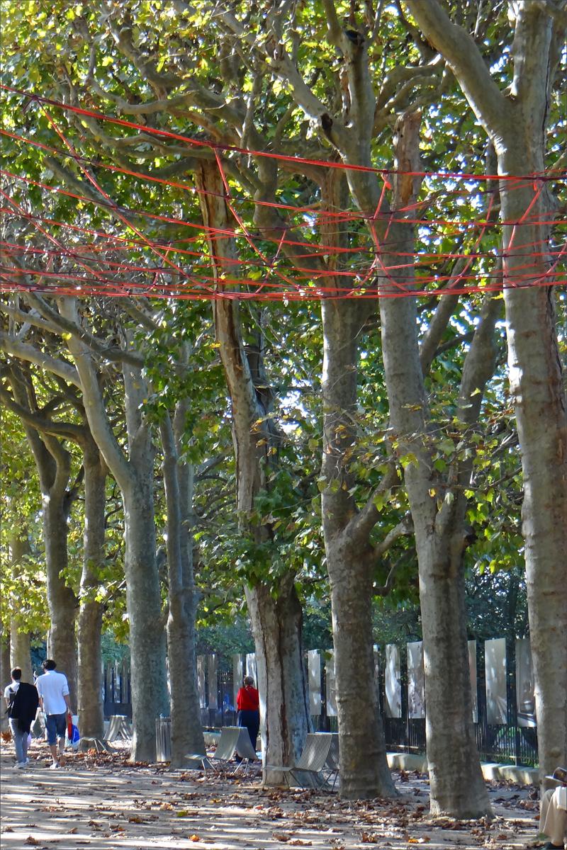 Plante Sur Les Murs file:fiac hors les murs, jardin des plantes 01