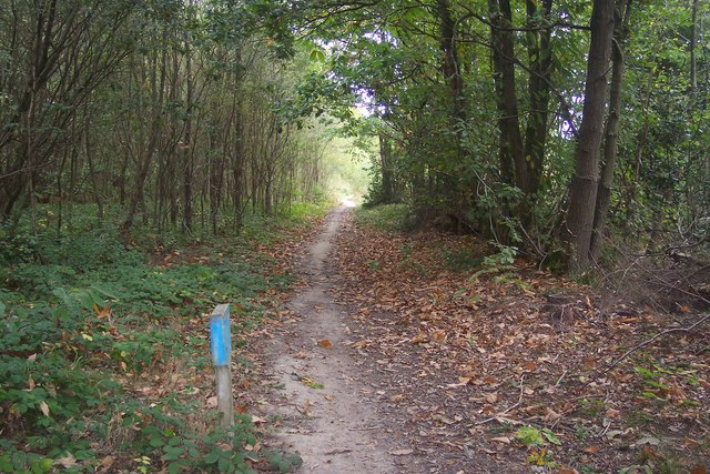Footpath in Clowes Wood - geograph.org.uk - 1520933