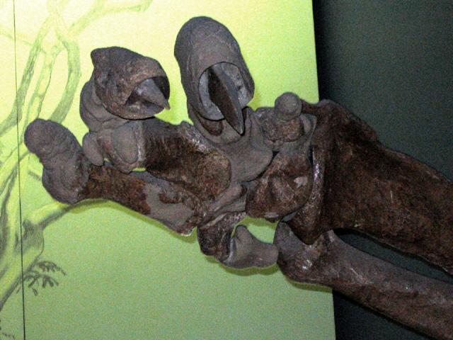 Sloth hands
