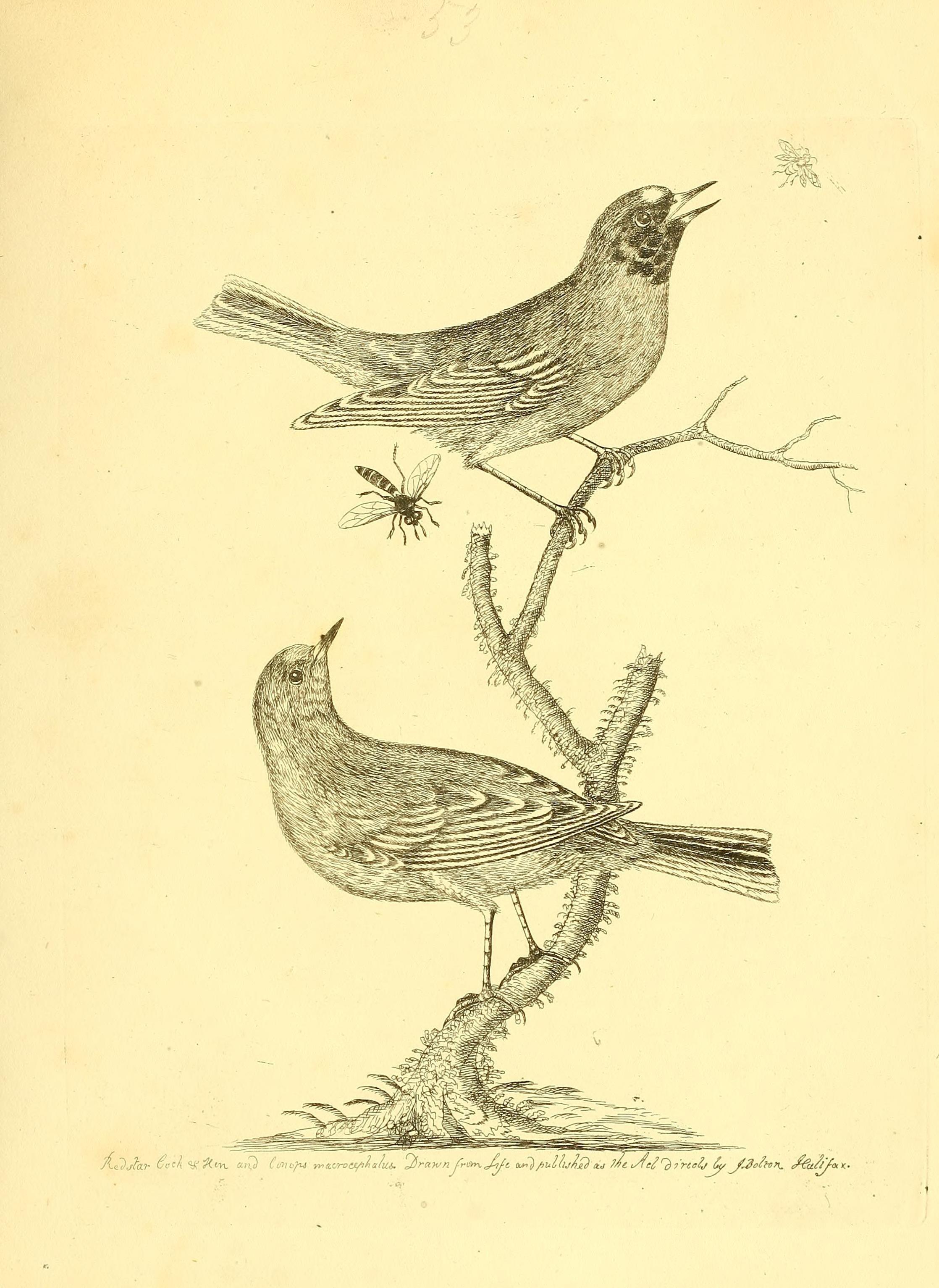 File:Harmonia ruralis, or, An essay towards a natural history of