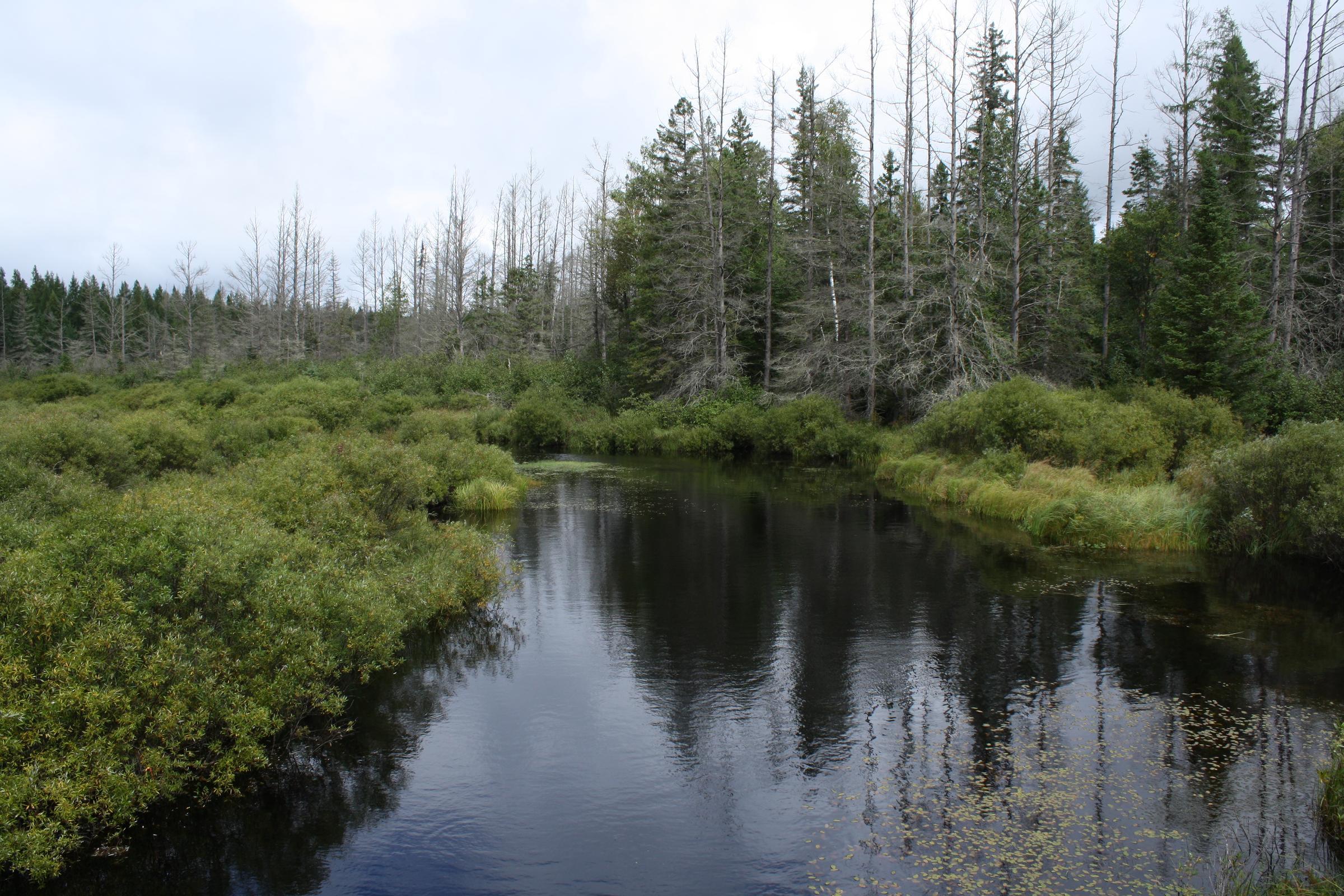 Headwaters Wilderness