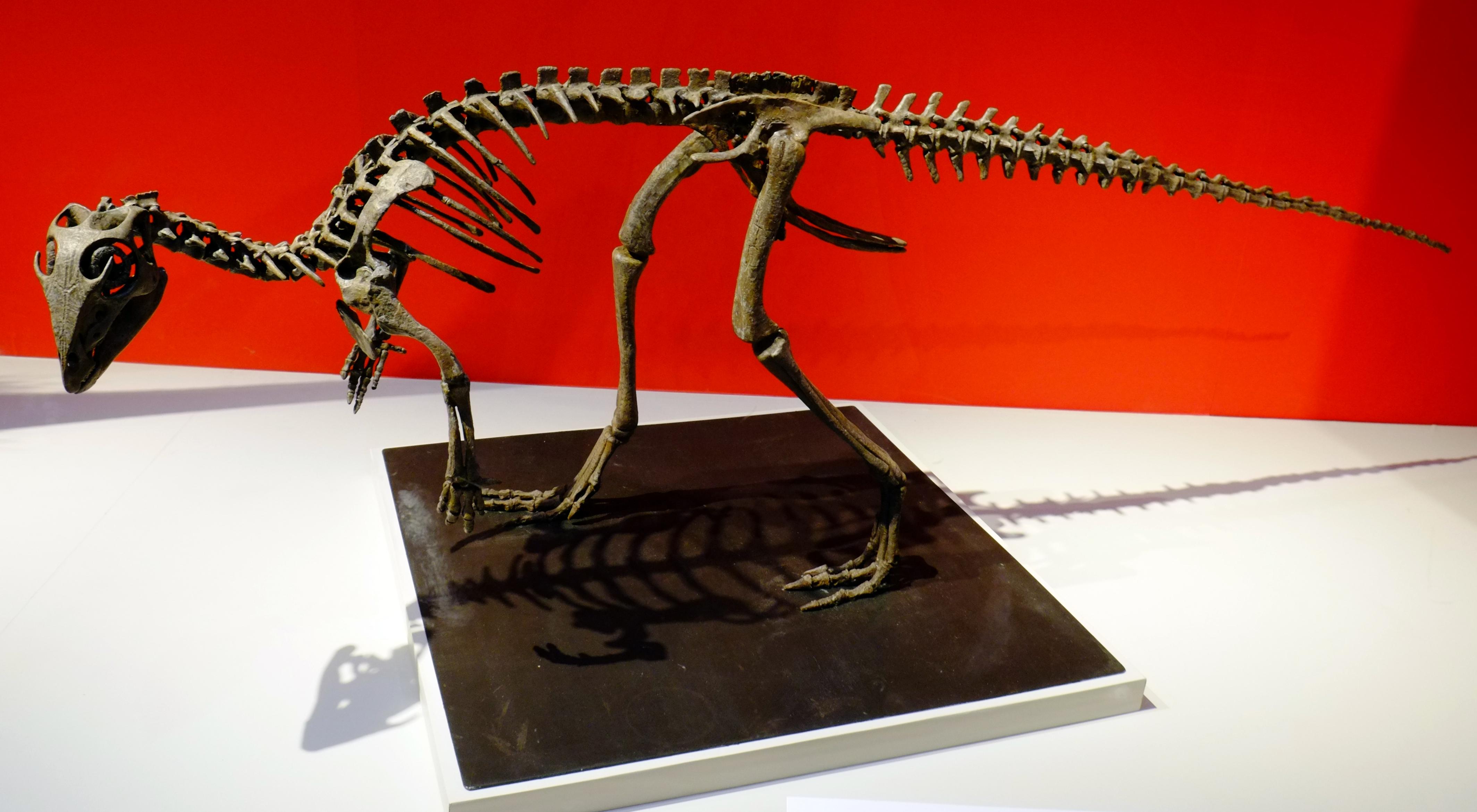kulindadromeus skeleton.jpg