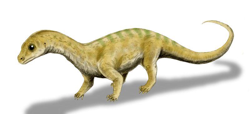 Datei:Massospondylus baby BW.jpg