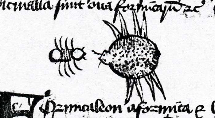 Mermecolion