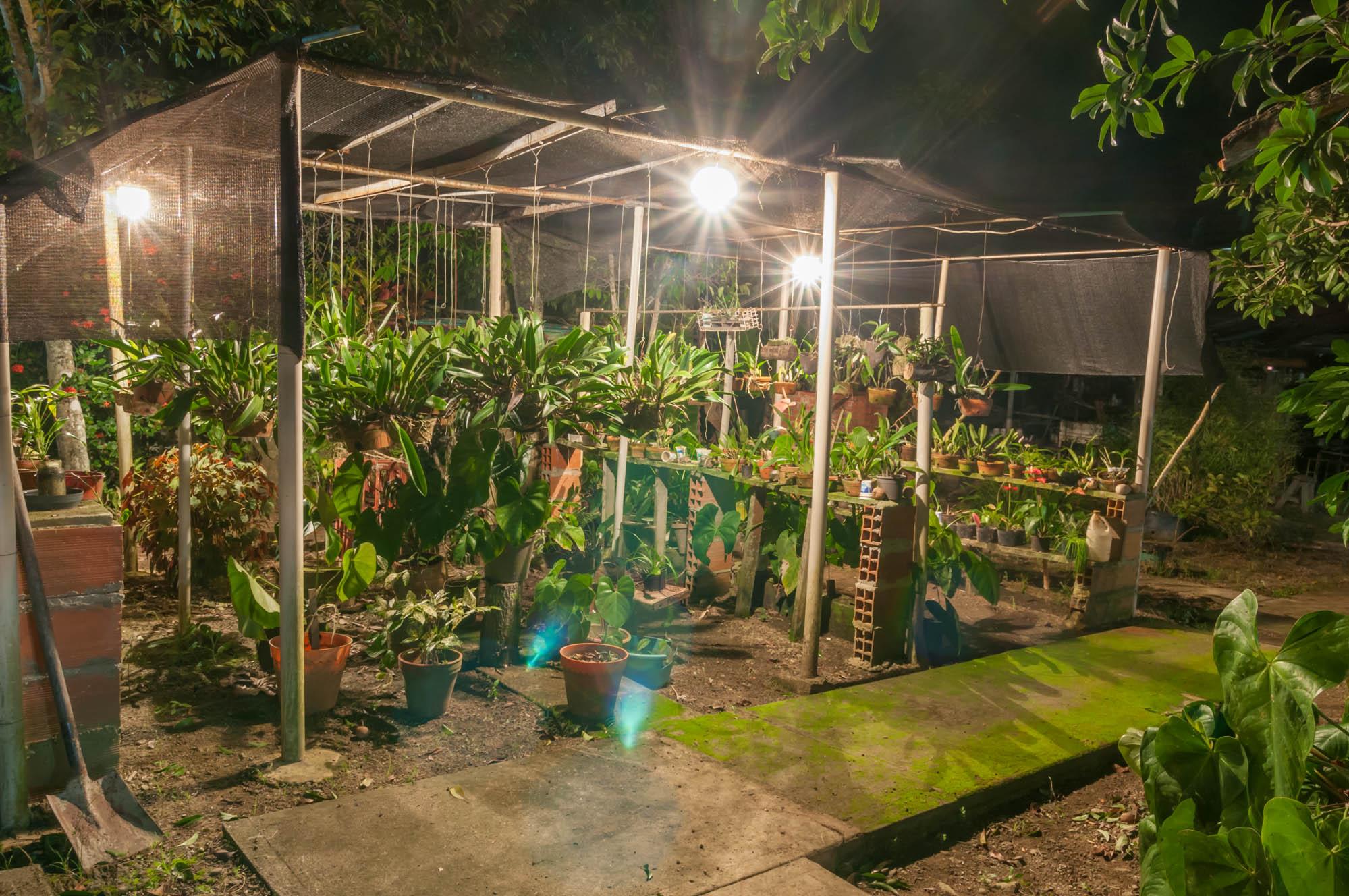 File Orchid Nursery Jpg