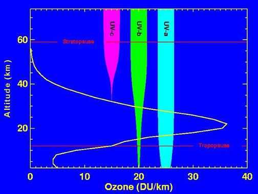 http://en.wikipedia.org/wiki/Image:Ozone_altitude_UV_graph.jpg