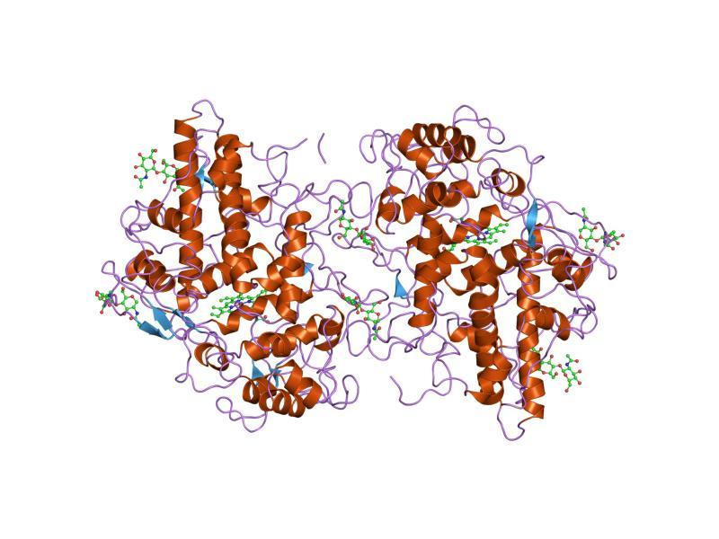 PDB 1myp EBI
