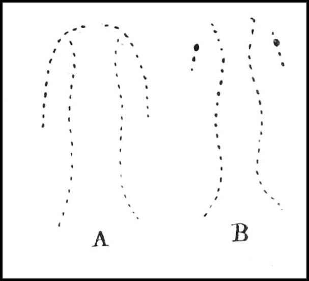 PSM V42 D505 Forms of snake bites.jpg