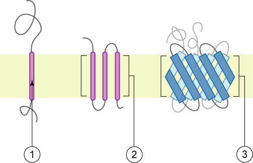 Figure 2 polytopic proteins