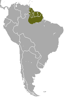 Red-faced Spider Monkey area.png