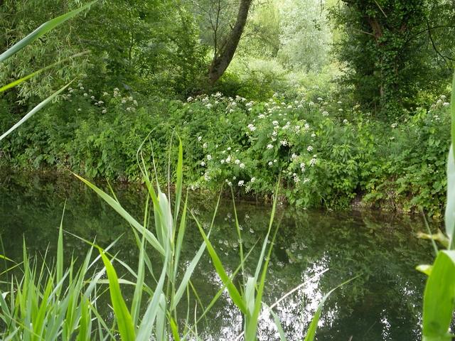 River Itchen at Winnall Moors - geograph.org.uk - 201600