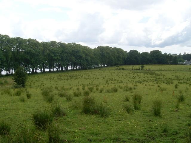 Woodland north of Bardowie Loch - geograph.org.uk - 1404441