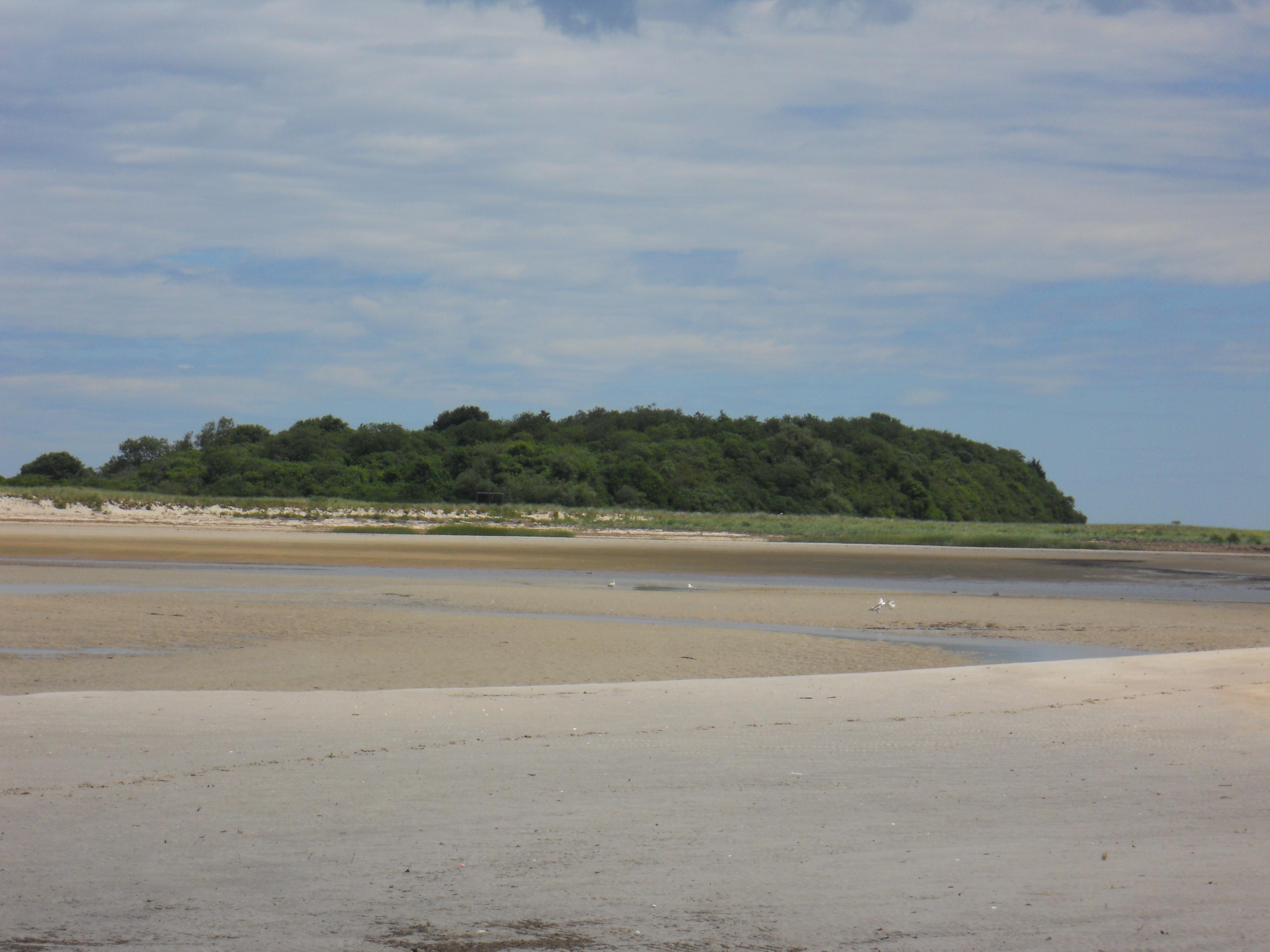 Sandy Point Beach Plum Island