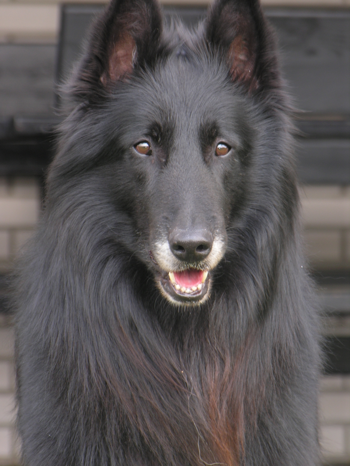 Image Result For Can Male Dogs